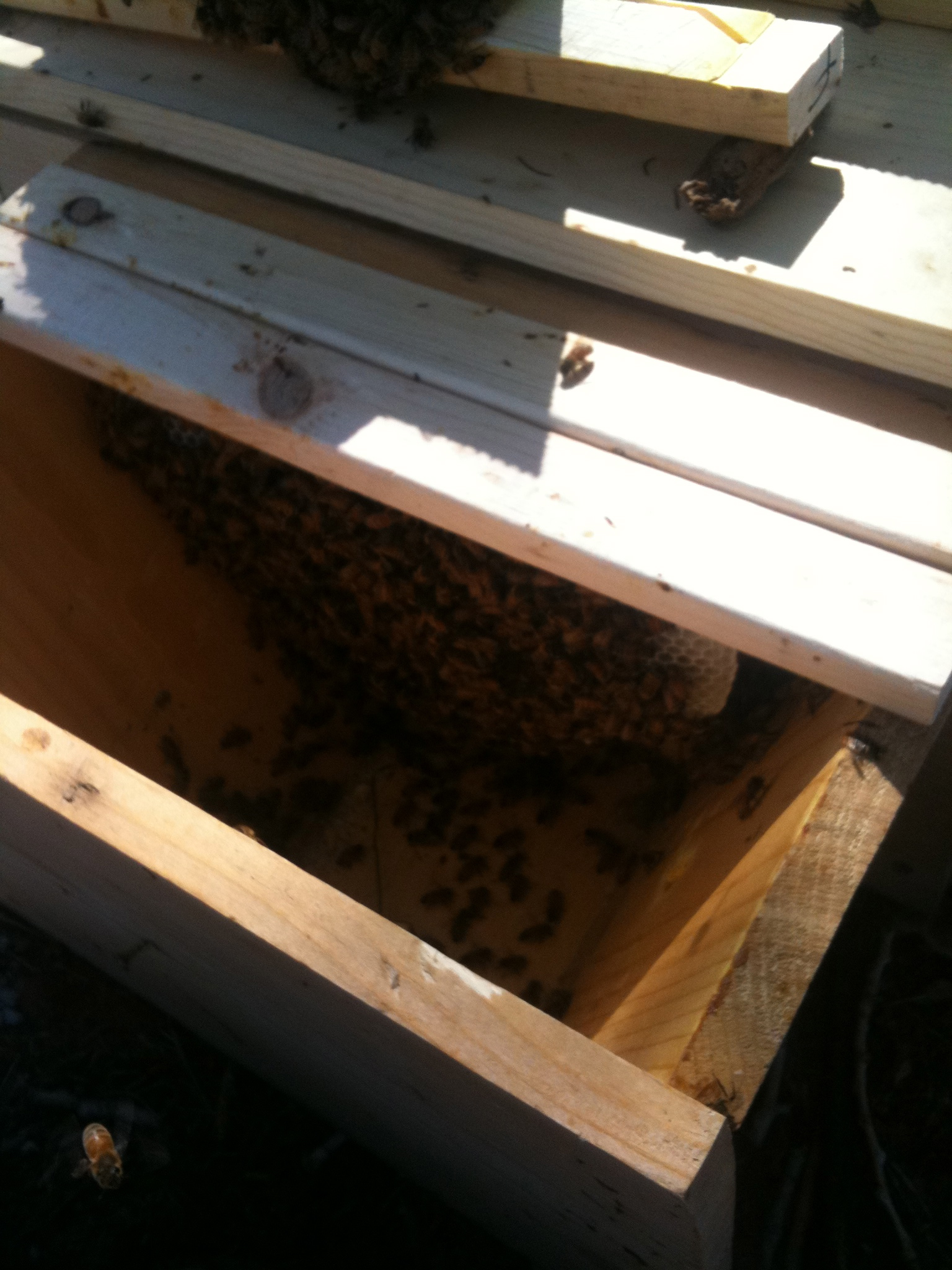 Top Bar Hive For Sale And Quite The Rage | Apis Hive ...