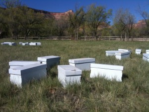 Spring Honey Bee Nucs