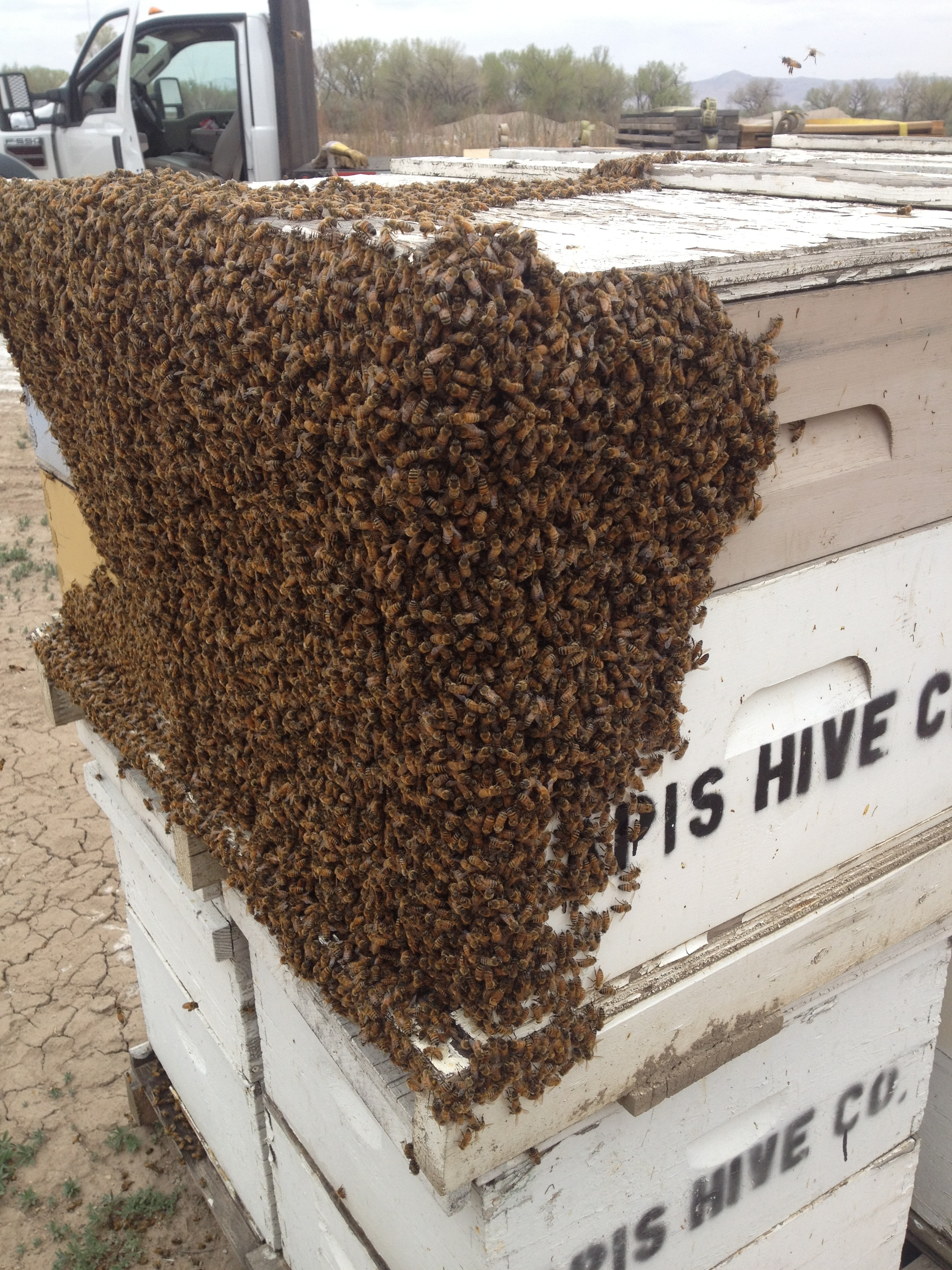 Package Honey Bees For Sale And Spring 5 Frame Nucs For ... - photo#2