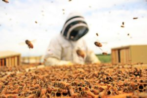 Chad or  Rob working Bees this spring